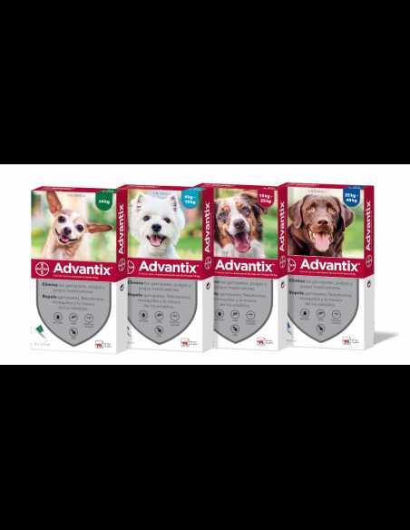 Pipetas antiparasitarias para perros advantix