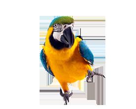 Colgante De Juguete De Madera Natural Para Periquitos 40 Cm Juguetes Para Grandes Loros Trixie Juguetes Para Loros Peque/ños Aves
