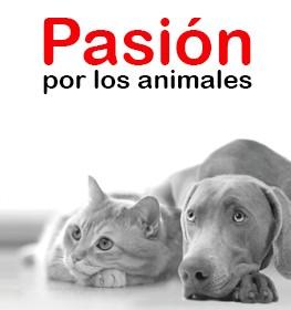 https://www.mascotasavila.com/modules/iqithtmlandbanners/uploads/images/5dd233ae4ca60.jpg